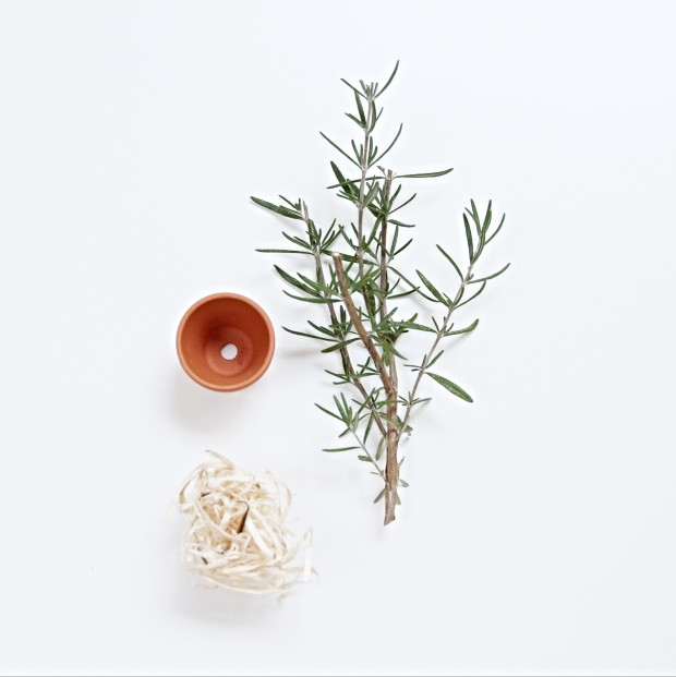 Rosemary, a pot and string on the counter.
