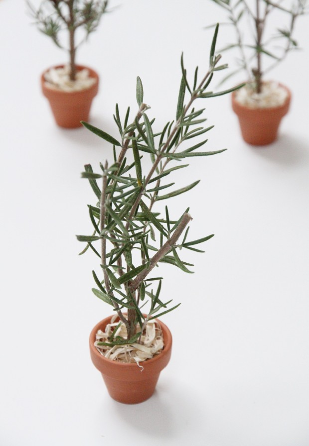 Putting the sprig of rosemary in the pot on the counter.