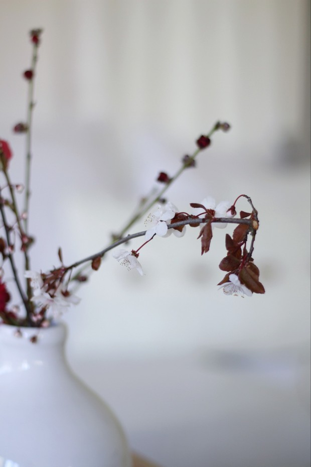 A vase filled with cherry blossom stems.