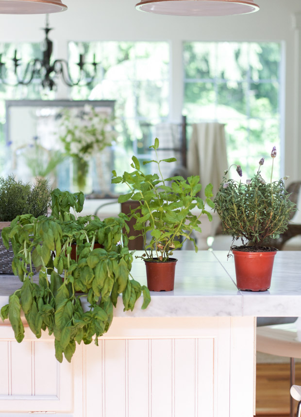 Potted plants on white counter.