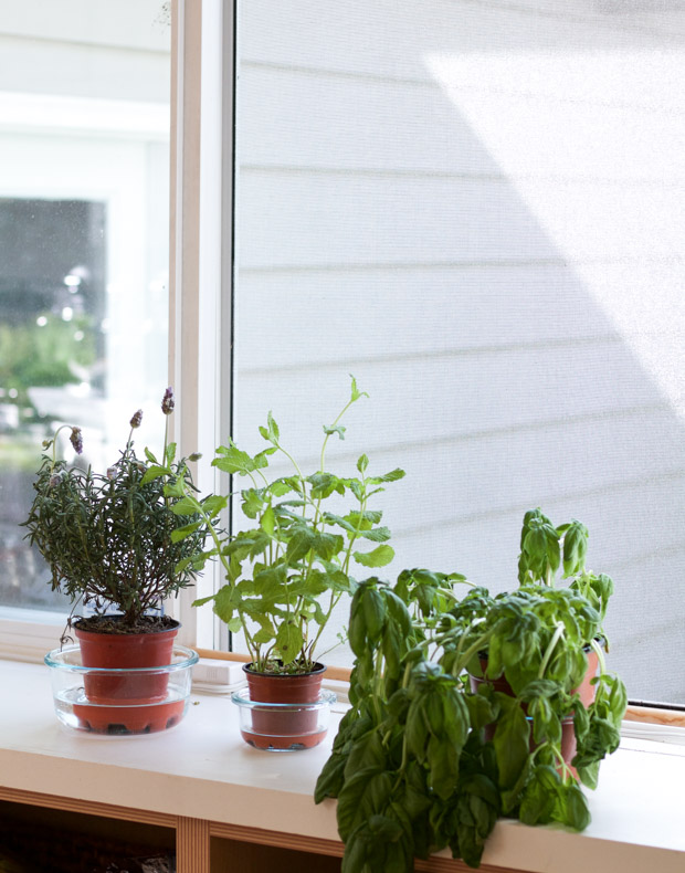 Plants sitting on the window sill.
