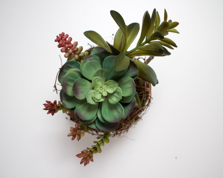 An aerial view of the grapevine planter on the counter.