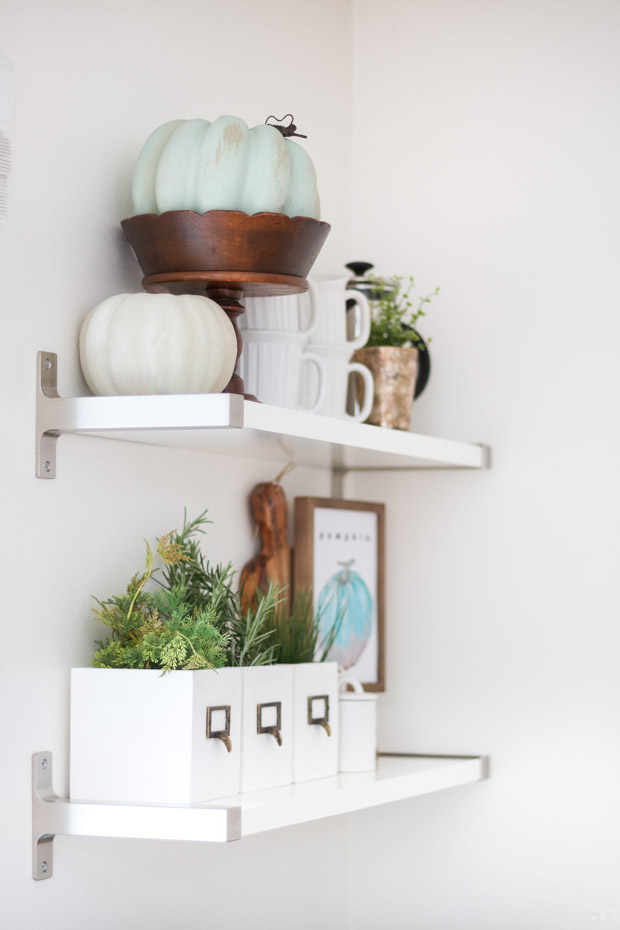 Two shelves with pumpkin and plants on it.