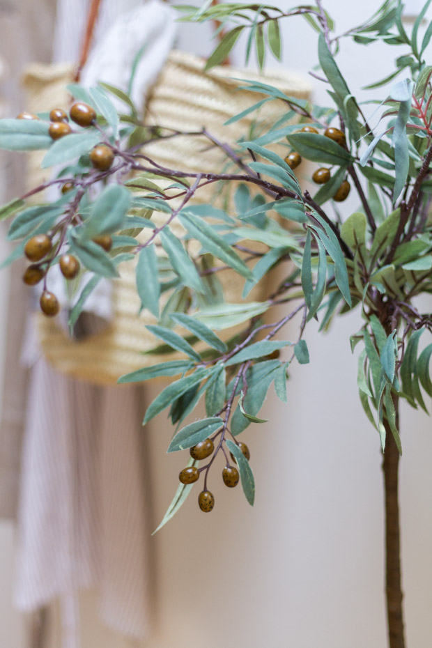 Green olive leaves and green olives on tree.