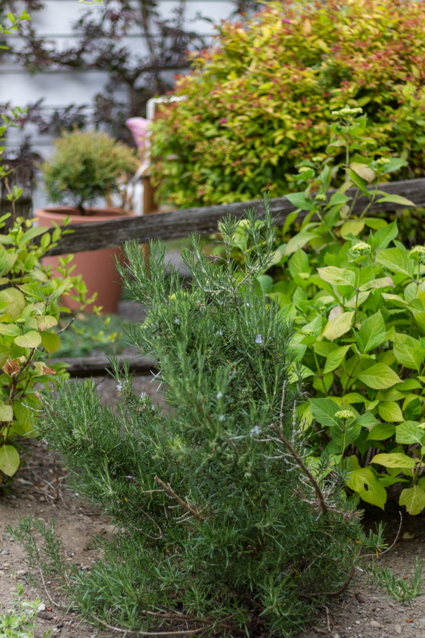 Bushes and greenery around wooden bench.