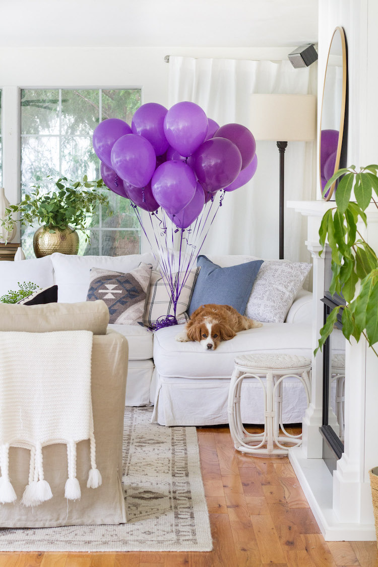 A dog lying on a white couch in the living room beside purple balloons.