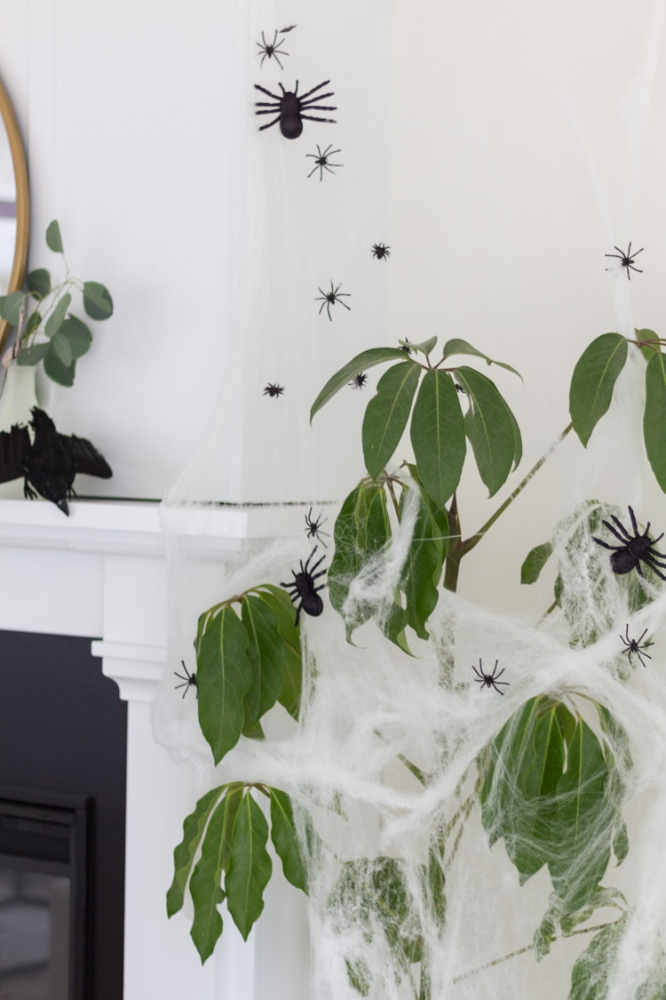 Black spiders all around the green plant with a crow on the mantel.