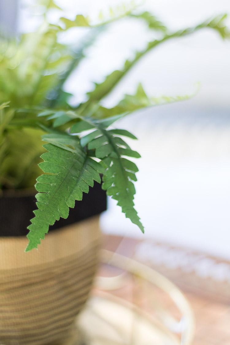 DIY Spring Fern Plant