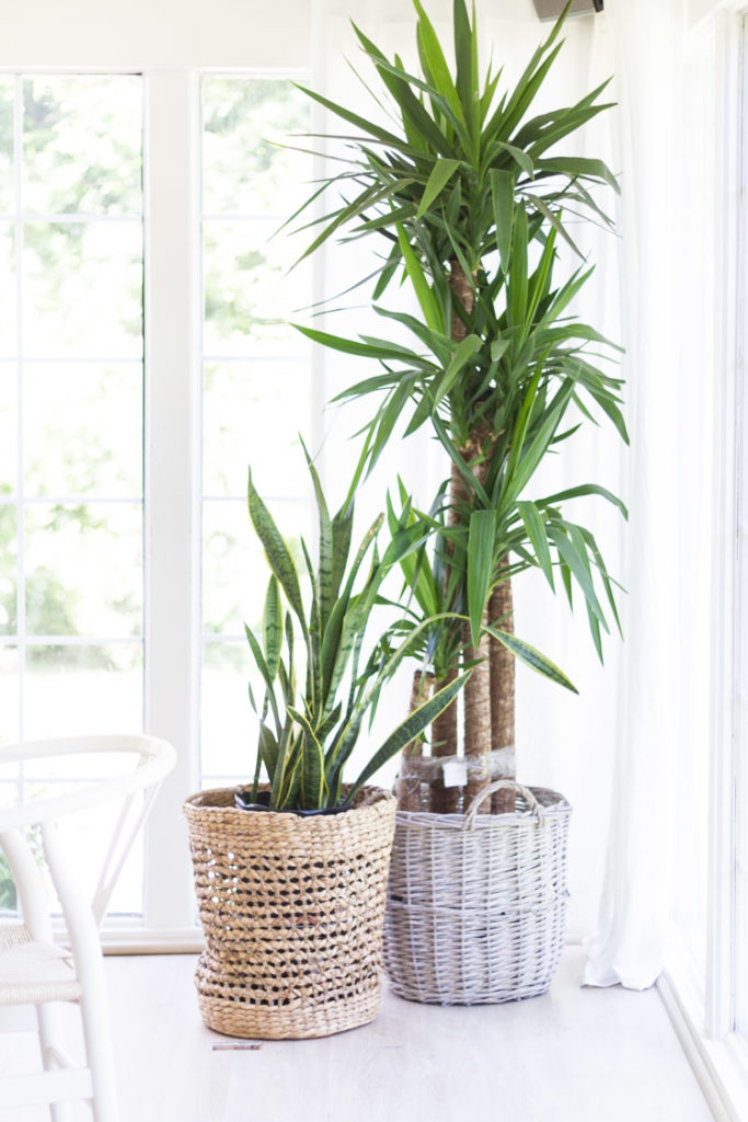 Easy Indoor Plants and Summer Living Room_