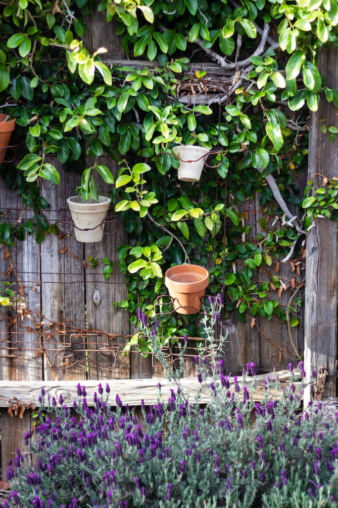 Garden Tips And Ideas From Our New Yard