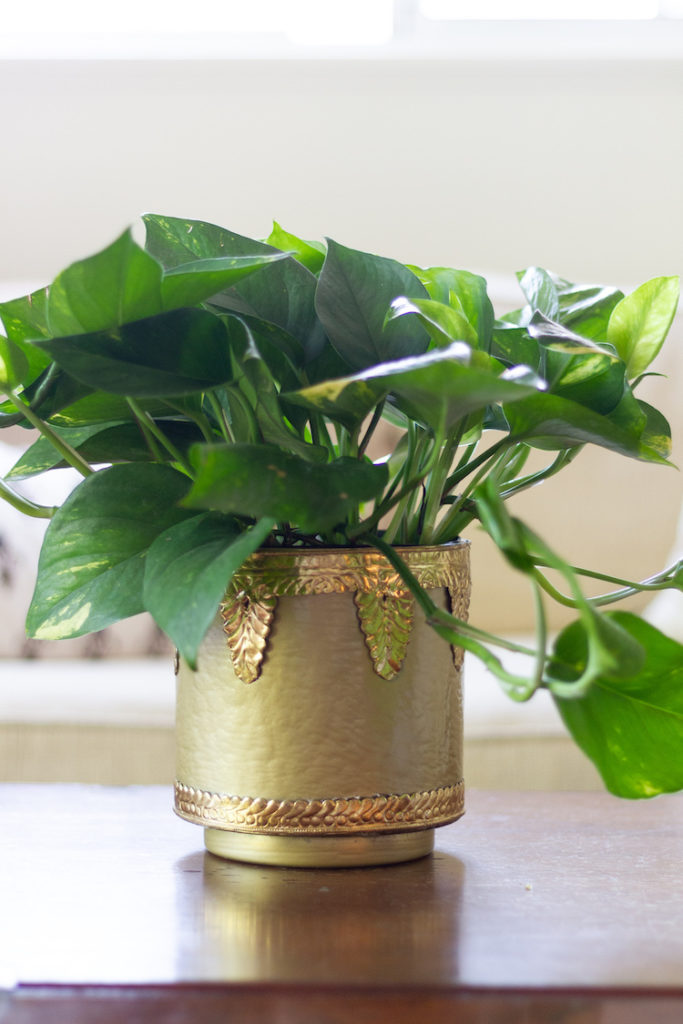 Upcycling a Glass Vase into a Pot with Spray Paint